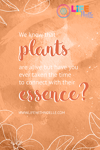 We know that plants are alive but have you ever taken the time to connect with their essence?